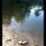 Shoreline reflection on Eagle Creek.